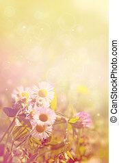 sommer, naturlig, baggrund