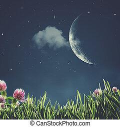sommer, night., abstrakt, naturlig, baggrunde, hos, skønhed, blomster