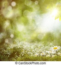 sommer, noon, baggrunde, hos, skønhed, bellis, blomster