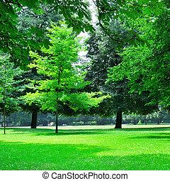 sommer, park, hos, smukke, grønne, græsplæner