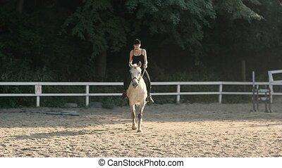 sommer, pferd, wald, reiten, anmutig, horse.