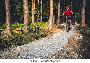 sommer, radfahren, berg radfahrer, wald, reiten
