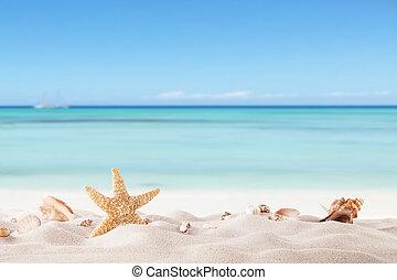 sommer, sandstrand, mit, strafish, und, schalen