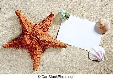 sommer, seestern, schalen, sand- papier, leer, sandstrand
