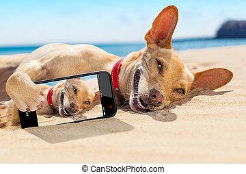 sommer,  selfie, hund