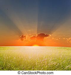 sommer, solnedgang