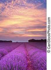 sommer, sonnenuntergang, lavendel