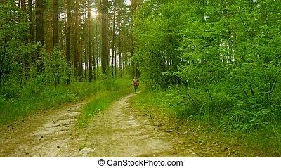 sommer, Sonnig, kiefer, rennender, wald, entlang, Kind,...