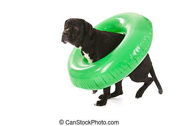 sommer, spielzeug, hund, schwimmender