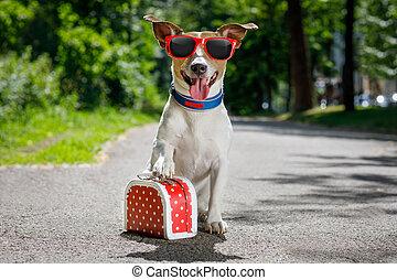 sommer, urlaub, hund