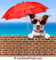sommer urlaub, hund