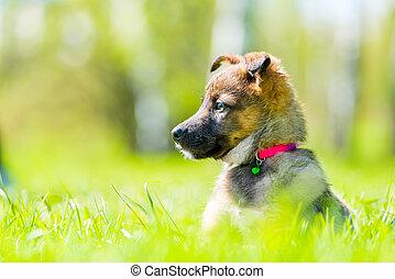 sommer, vorsichtig, park, junger hund, grün, porträt, horizontal, gras, tag