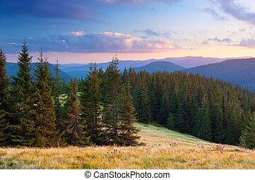 sommer, wald, landschaftsbild, berge