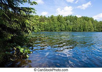 sommer, waldsee