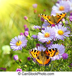 sommerfugl, blomster, to