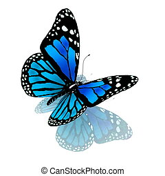 sommerfugl, i, blå, farve, på, en, hvid