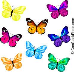 sommerfugl, ikon, sæt