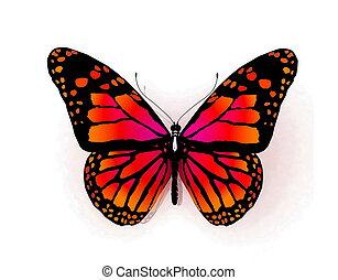 sommerfugl, isoleret, hvid