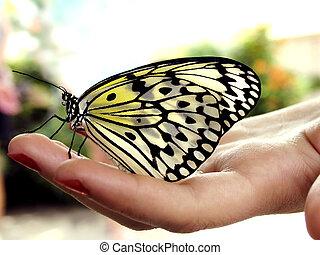 sommerfugl, på, hånd