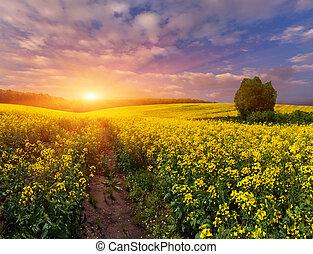 sommerlandschaft, mit, a, feld, von, gelber , flowers.,...