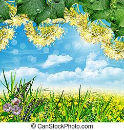 sommerlandschaft, mit, feld, blumen, auf, a, hintergrund, von, blauer himmel