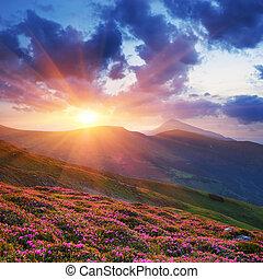 sommersonne, landschaftsbild, berge