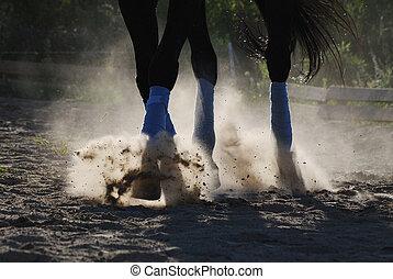 sommes, cheval, long, galoper