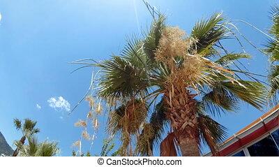 sommet arbre, ensoleillé, clair, paume, 4k, vidéo, jour
