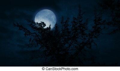 sommet, arbre, lune, grand, derrière, nuit
