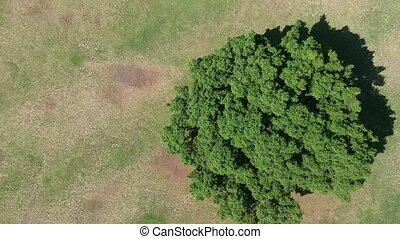 sommet arbre, oeil, oiseau, vue
