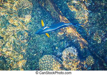 sommet bleu, parrotfish, vue