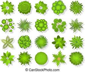 sommet, bush tropical, vert, bushes., carte, regard, au-dessus, parc, arbres, forêt, paysage, aérien, icônes, vecteur, vue, arbre, ensemble, elements.