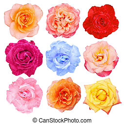 sommet, collection, roses, vue