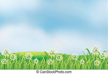 sommet colline, mauvaises herbes