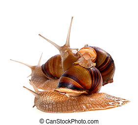 sommet, escargots, autre, famille, une