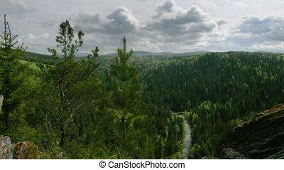 sommet, timelapse, forêt, vue