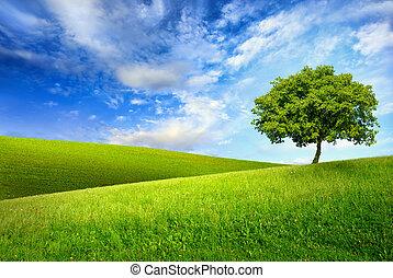 sommet vert, arbre, unique, colline