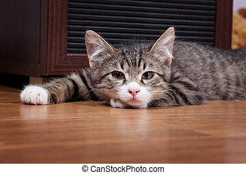 somnolent, chaton