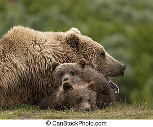 somnolent, grisonnant, maman, à, deux, petits