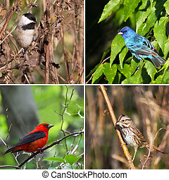 Four species of song birds in natural environments.