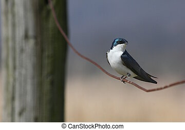 Songbird on wire