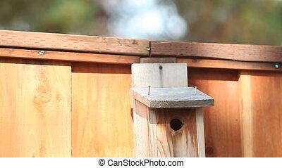 songbird pair at the birdhouse - tufted titmouse birds land...