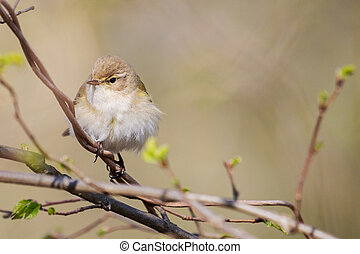 songbird sits on a branch in the forest