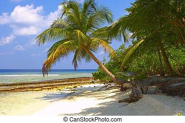 sonho, praia tropical, com, coqueiros, com, pássaro