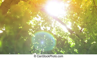 sonne, bäume, linse, durch, leuchtsignal, blank