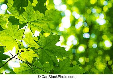 sonne, Blätter, grün