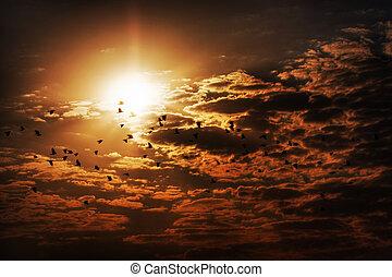 sonne, wolkenhimmel, vögel, gegen