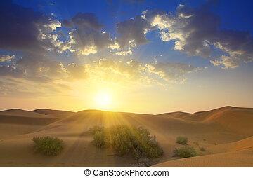 sonnenaufgang, in, wüste