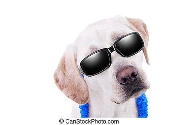 sonnenbrille, hund, urlaub