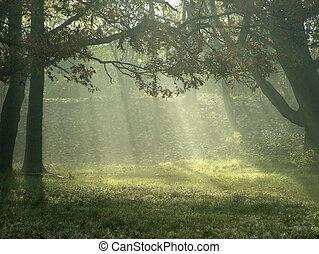 sonnenlicht, durch, bäume